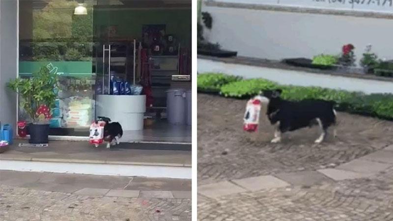Pituco, el perro independiente